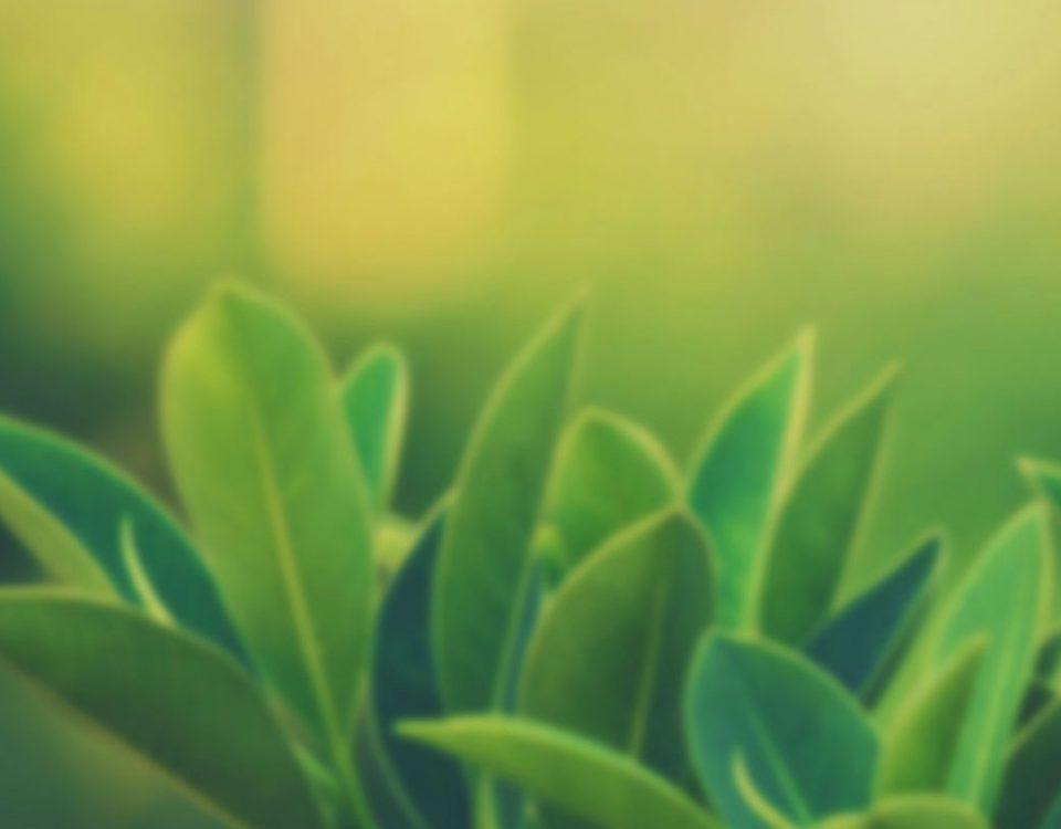 iktiyozis-hastalığına-faydalı-bitkiler