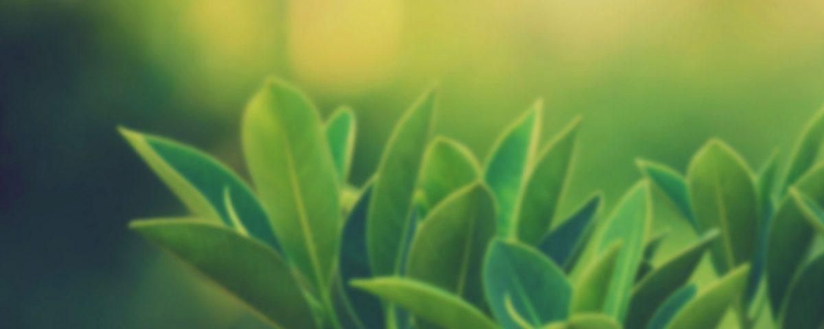 iktiyozis-hastalığına-hangi-bitkiler-iyi-gelir